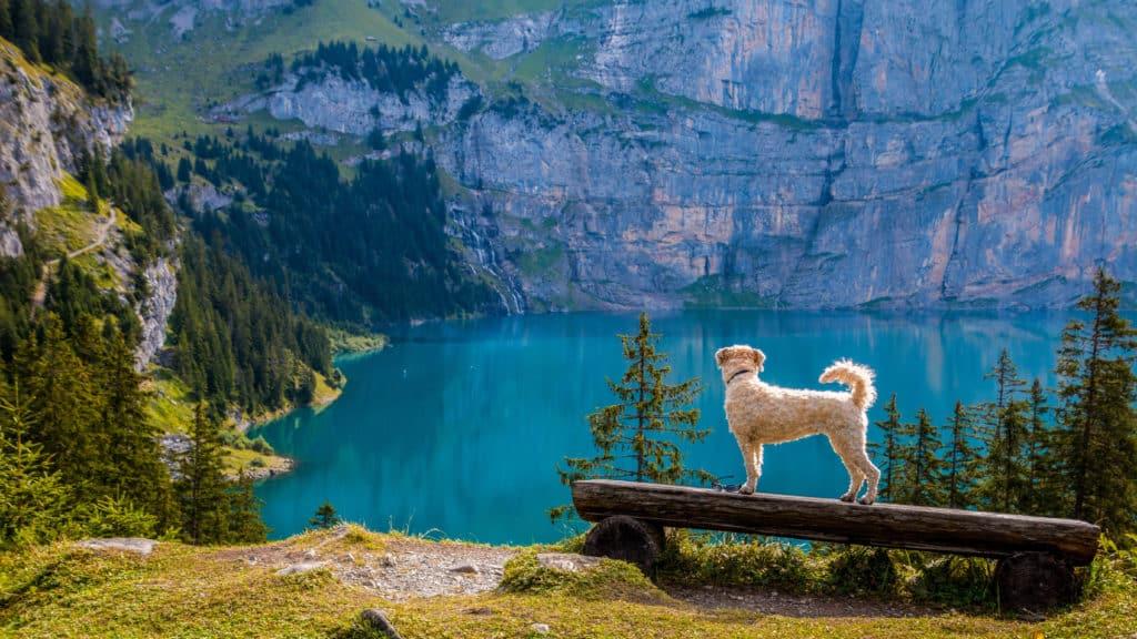 The Environmentally-FriendlyDog